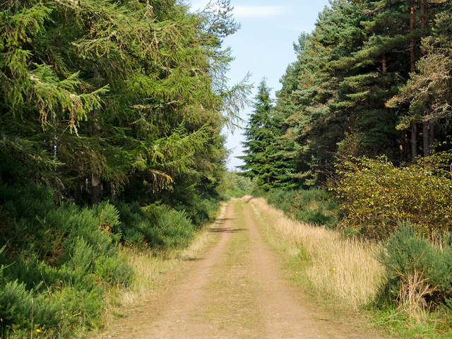 Track through the Millbuie Forest