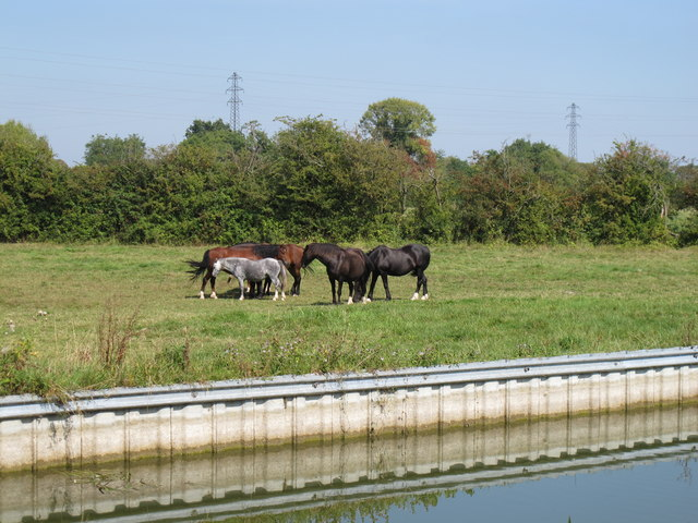 Horses by the Aylesbury Arm, Grand Union Canal