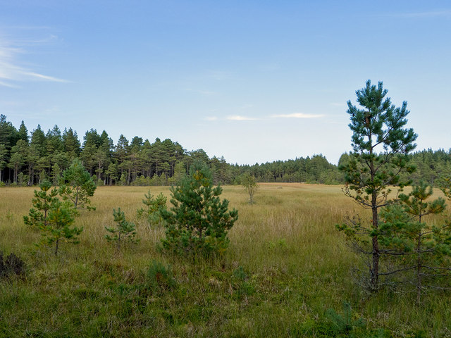 Bog lake in the Millbuie Forest