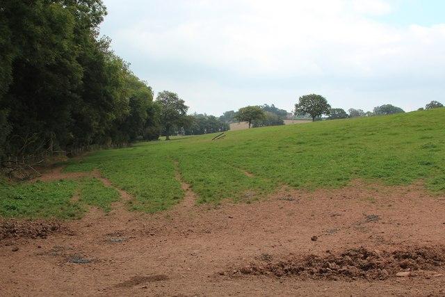 Field near Old Harpfields