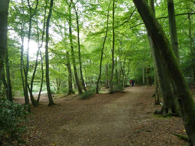 Path, Burnham Beeches
