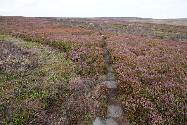 Causey-path on Rosedale Moor
