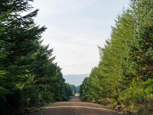 Kingsley Wood Way