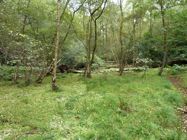 Damp area, Egypt Woods