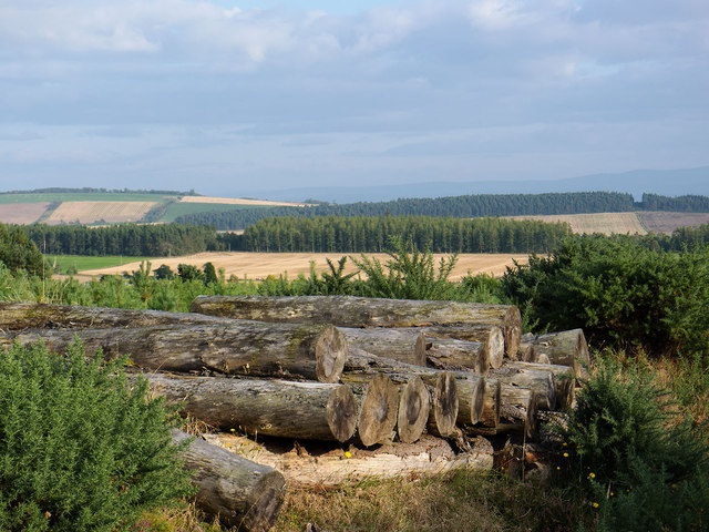 Farmland and Forestry on the Black Isle