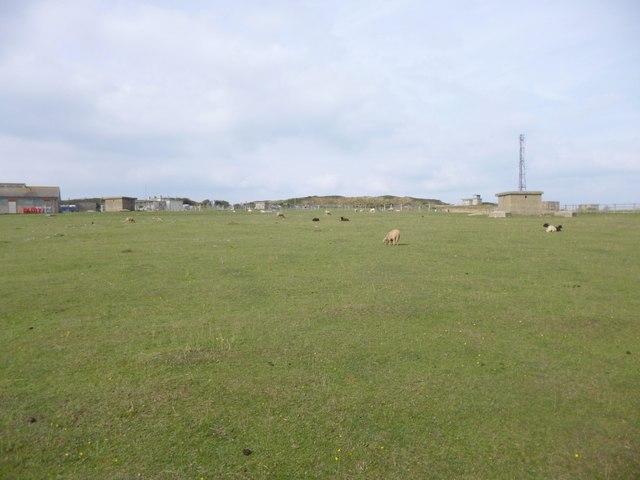 Grove, sheep grazing