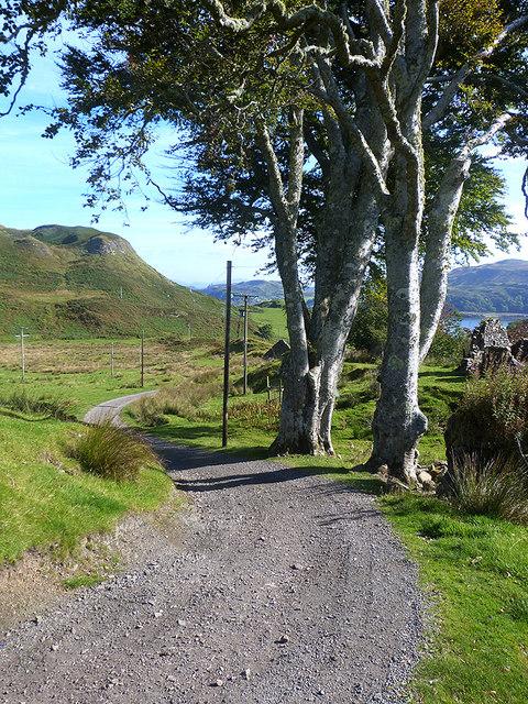 Roadside trees at Upper Gylen