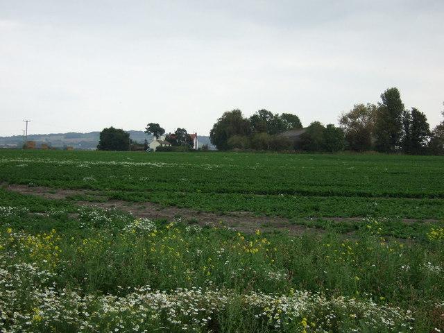 Farmland east of News Lane