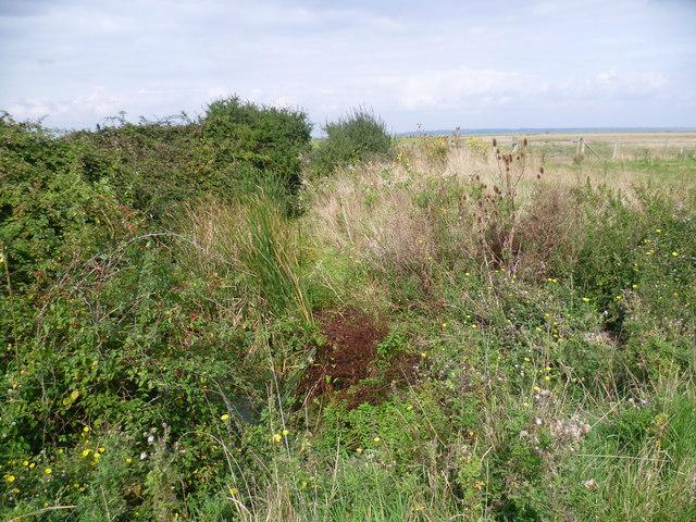 Vegetation-filled dyke