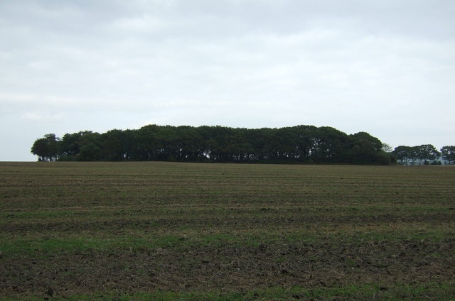 Farmland towards Fairhurst's Plantation