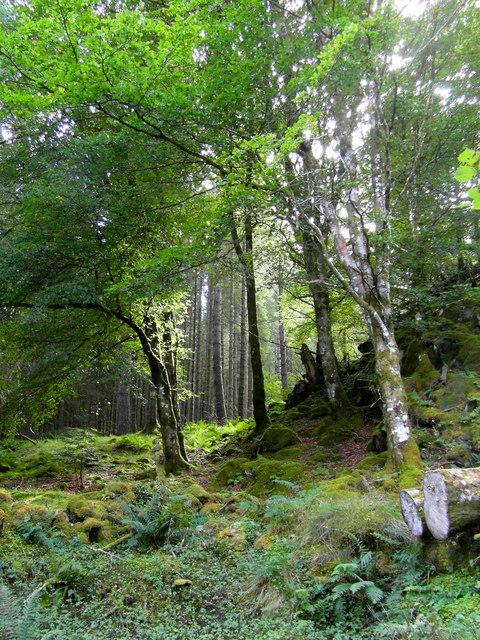 Woodland in Knapdale Nature Reserve