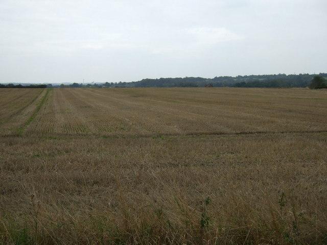 Stubble field east of Burrows Lane