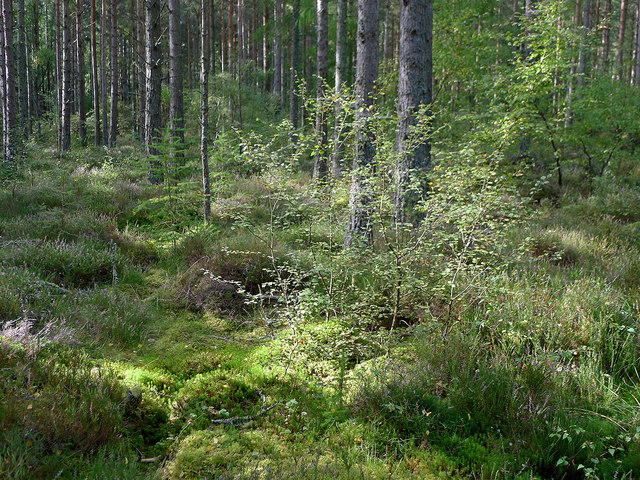 Woodland near Coulnagour