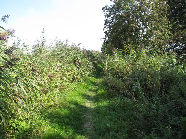 Grassy towpath of Aylesbury Arm canal
