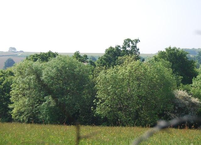 Woodland south of Cornford Lane