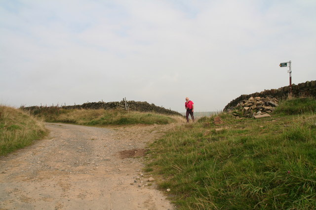 Meeting of the paths on Meal Hill, near Holme