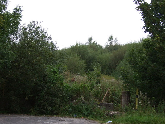 Woodland beside Cronton Road