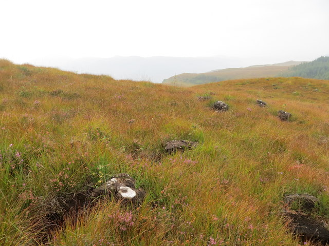 Regeneration of moorland with native trees