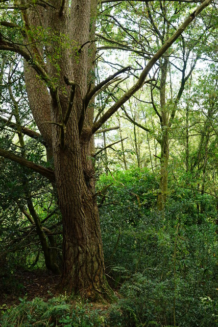 Foresthow Wood
