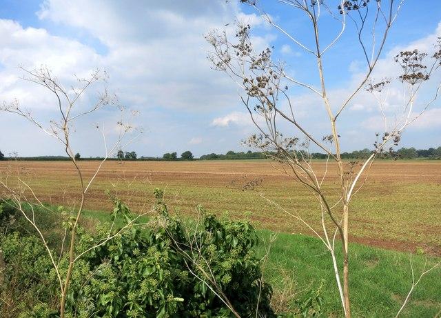 View near Gainfield