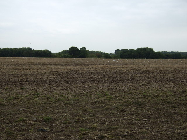 Farmland east of Whitefield Lane
