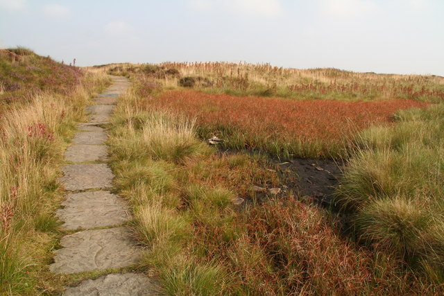 Autumn colours in the bog plants by the Pennine Way