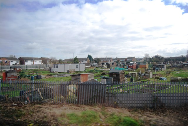 Allotment by the railway, Royston