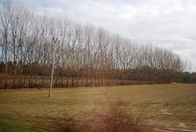 Shelterbelt, Bury Lane Fruit Farm