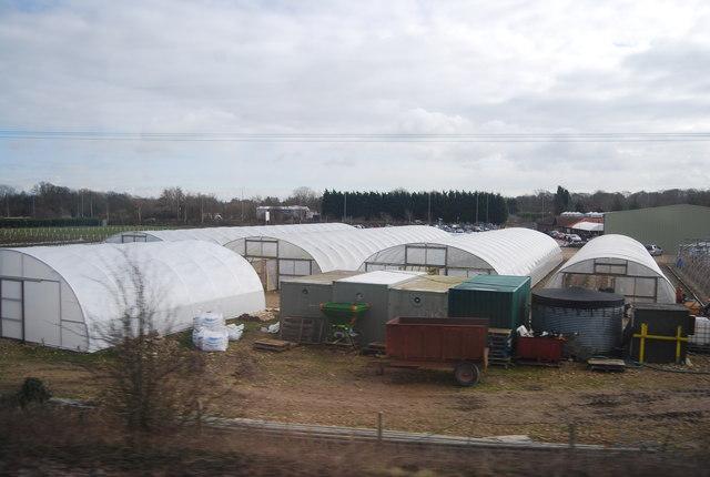Polytunnels, Bury Lane Fruit Farm