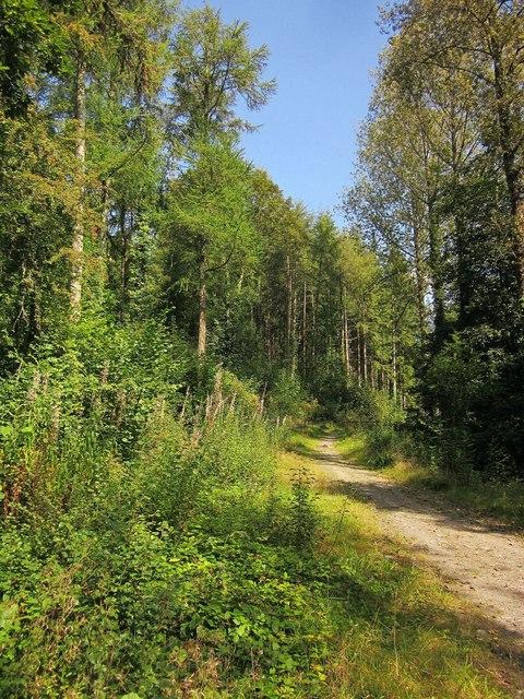 Path near Bake Wood