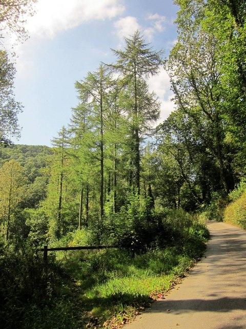 Lane near Bake Wood