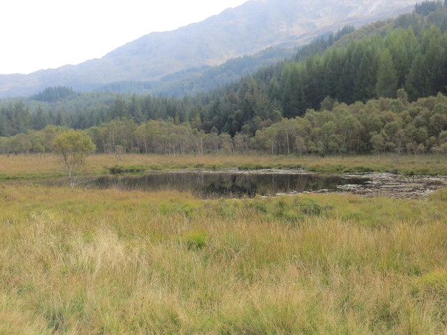 Small lochan at the forest edge at Achnanellan