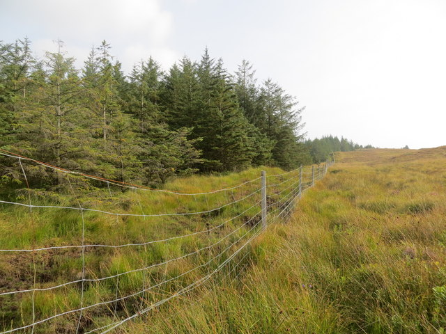 Fenceline at the edge of the forest above Tom a' Bhealaich