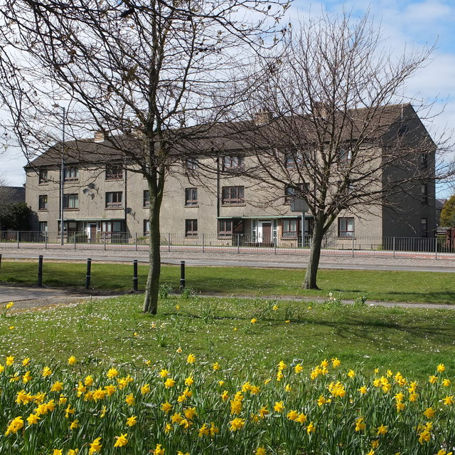 Council flats with daffodils