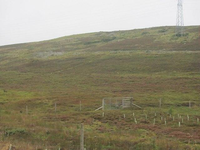 Newly planted woodland, Allt Cosach