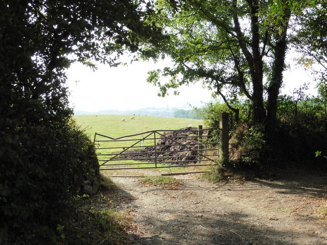 View towards a field of sheep