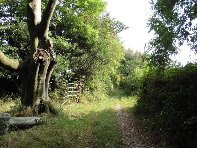 Small Lane, near Rattery