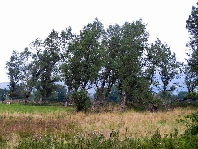 Old Poplar Plantation