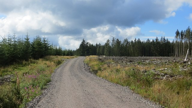 Logging road, Forest of Ae