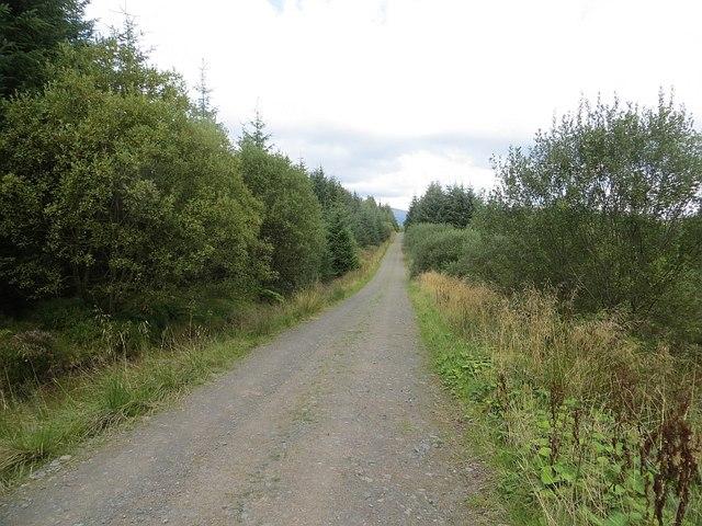Logging road, Ae