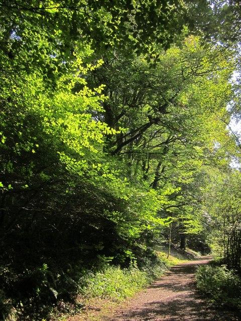 Path down Seaton valley