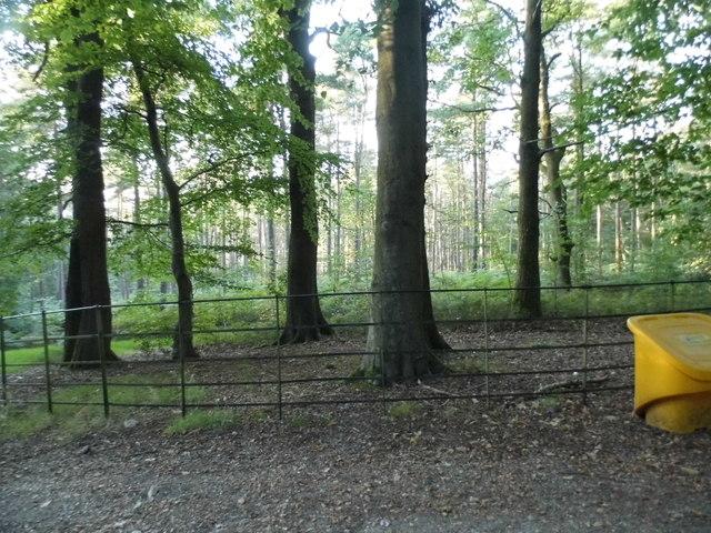 Winterfold Wood by Barhatch Road