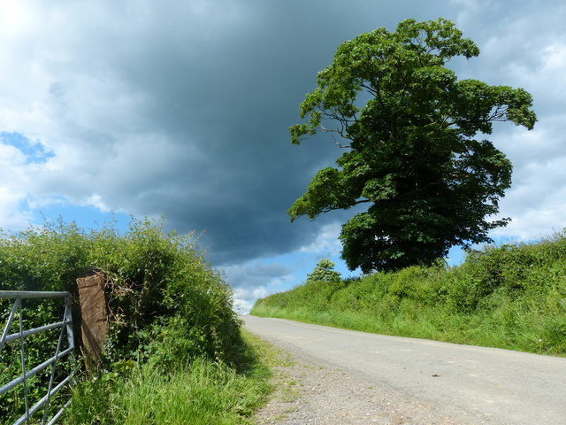 Gate and tree along Wood Lane