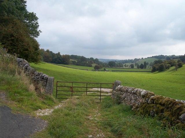 Field of Livestock near Parwich Lees