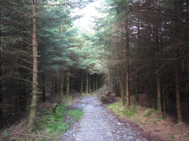 Path in Beddgelert Forest