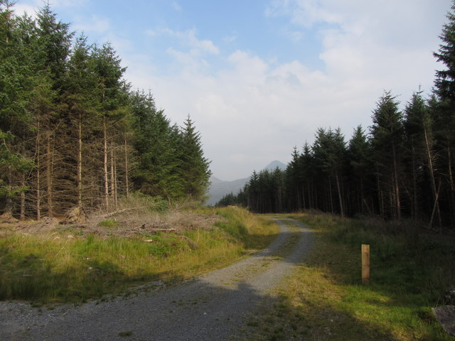 Track through Beddgelert Forest