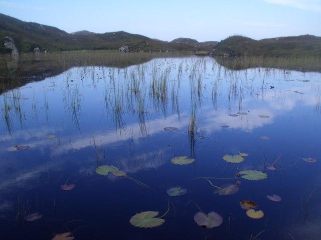 Lilied lochan by Loch a' Chapuill near Lochinver