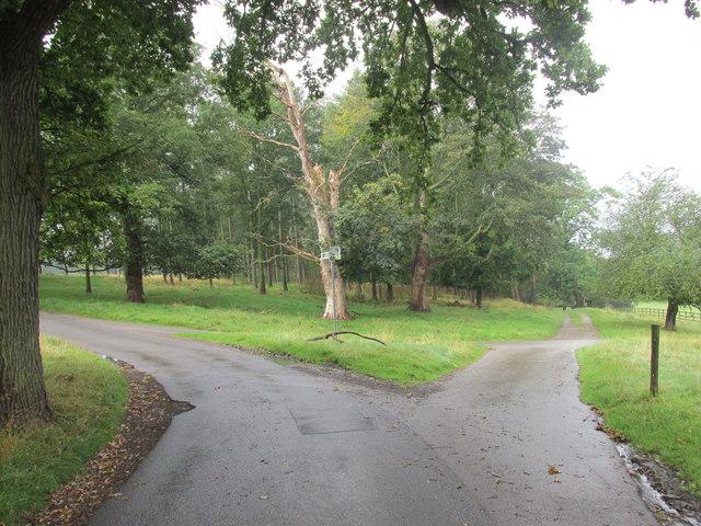 A bridleway junction.