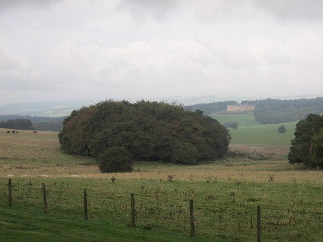 Lodge hills plantation.