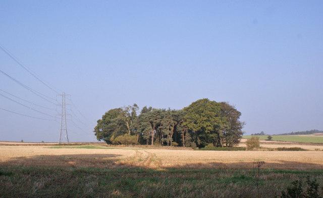 Trees in a field